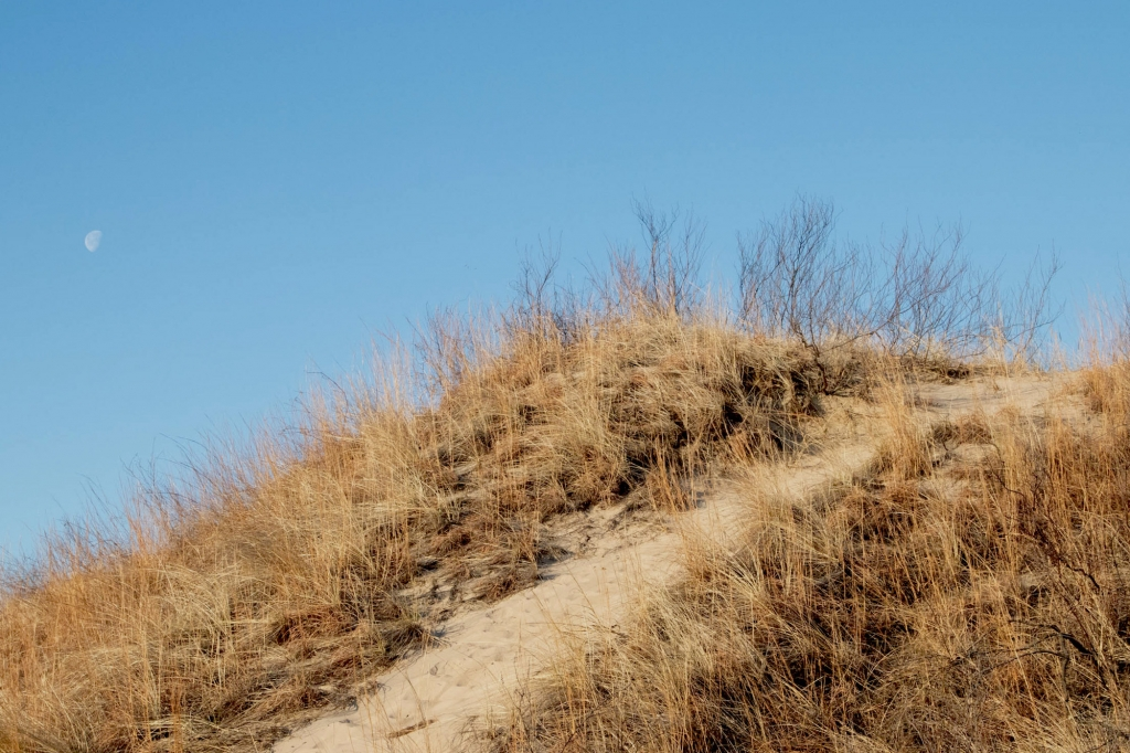 Moon over a dune