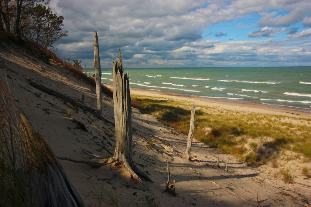 Bare trees on a sand dune near the lakeshore