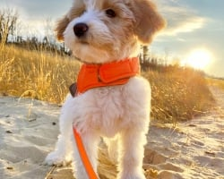 Pet Friendly: Dog at the Dunes